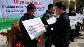 Viettel tặng bò giống giúp đồng bào nghèo biên giới tại Hà Giang