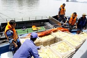 Lực lượng Trinh sát Bộ Tư lệnh Cảnh sát biển bắt giữ tàu vận chuyển gia cầm trái phép