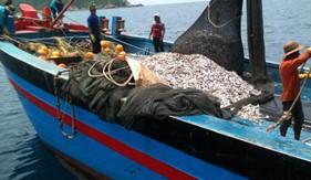 Một số quy định về xử phạt hành chính trong lĩnh vực giao thông hàng hải, đường thủy nội địa