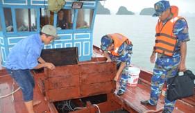 Bắt giữ tàu chở lậu hơn 10.000 con cá giống trên vùng biển Quảng Ninh