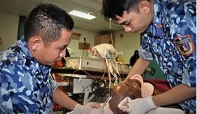 Bộ Tư lệnh Vùng Cảnh sát biển 3 cấp cứu ngư dân bị tai nạn trên biển