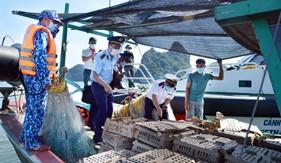 Bộ Tư lệnh Vùng Cảnh sát biển 1 bắt giữ vụ vận chuyển gà giống trái phép trên biển